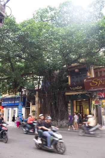 Hanoi-205